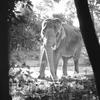 動物園の想い出