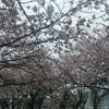 「桜流し」の話