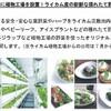 イオンモール沖縄における植物工場