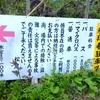 松尾寺 舞鶴の駐車場への楽々アクセス方法はこちらから!