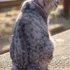 千光寺公園のお猫様