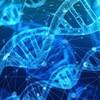 変形性股関節症は遺伝する?