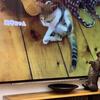 旅猫ロマンという番組