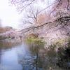 井の頭公園の桜は3~6分咲きでもお花見の人はいっぱいでした(2017年4月2日の桜)
