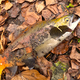 秋の屈斜路湖を散策 ヒメマス釣り(姫鱒釣り、チップ釣り)に挑戦!【Vlog】
