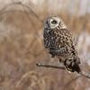 盆、暮れ、正月が一度に来たような充実の鳥見!