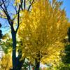 事務仕事と溝切りと快晴の秋の空