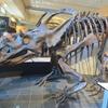 オタワ旅行の続編 カナダ自然史博物館