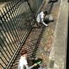 草抜き清掃ボランティア募集!