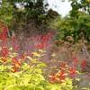 【京王フローラルガーデンアンジェ アクセス~自然散策まで 実体験レビュー後編】バーベキューまでできる、植物園、ガーデンを楽しむ実体験レビュー