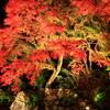 土岐・曽木公園の紅葉ライトアップ