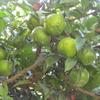 秋の木の実・草の実