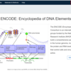 ENCODEプロジェクトのNGSデータを活用する