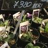スミレ 春を告げる花.日本では万葉集にも詠まれています.ではギリシャ神話では? かなり見つかりますが,ほとんどが後世付け加えたものらしい.古代ギリシャの話としては,スミレのベットで,蛇にハチミツを食べさせてもらった「イアモスの誕生」の話が見つかりました.