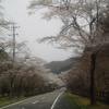 3月30日のブログ「寺尾の千本桜へ、都市計画審議会から答申受領、関YEGから絵本寄付受領、ラグビー意見交換会」