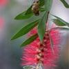 赤塚植物園でお花撮影してきました。