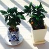 最近の植物