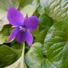 バラ庭に肥料
