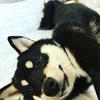 犬への愛情