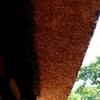 【軒・庇】=日差しをコントロールしたり外壁を保護するなど、知られざるその機能と効果を再検証。