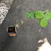 ペットボトル家庭菜園!22日目の悲劇…!枝豆が…、