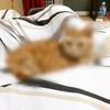 猫をFoodieで盛ってみた【インスタ映え】