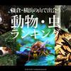 鎌倉・横浜の山で出会うの動物・虫ランキングTOP10【スズメバチ・ヘビ・リス・トンビ】