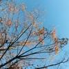朝の空と葉っぱ