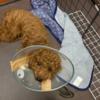 エリザベスカラーの変更のため動物病院へ。