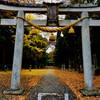 久しぶりの雨と神社の落葉