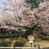 桜には実がなるの?