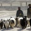 【雑想】「アフガニスタンのヤギ飼い」説話の意味するもの?