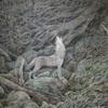 玉川麻衣さんの個展「あわいの神々」にお邪魔してきました!–– 狼信仰をたどる旅・その5