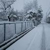 雪⛄積もりました