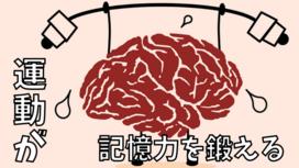 少しの運動だけで記憶力が20%アップする?【運動と海馬とBDNF】