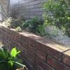 花壇の管理