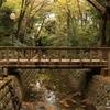 東京23区唯一の等々力渓谷で散策してきました