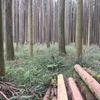 きらめ樹して4年経った森