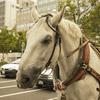 【一日一枚写真】馬車の休憩 Part.2【一眼レフ】