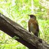 鳥撮り@平山城址公園で、はじめましてが2つ(^o^)ノ