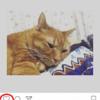Instagram 気に入った写真に「いいね!」をつけよう!