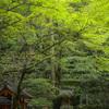 貴船神社奥宮の連理の杉