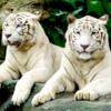 シンガポール動物園の楽しみ方♪