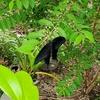 黒い蝶の訪問者があり、リンはトリミングする