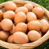 健康にいい!卵(鶏卵)に含まれる栄養と健康効果10選について
