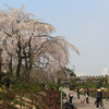 桜三昧の日々2