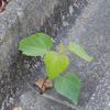 庭に勝手に生えた木の正体は? こぼれダネで出た幼木は早く抜くべし