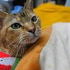 8月後半の #ねこ #cat #猫 どらやきちゃんB