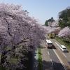 PENTAX K-3で桜「百間堀」