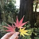 greenglass22's blog
